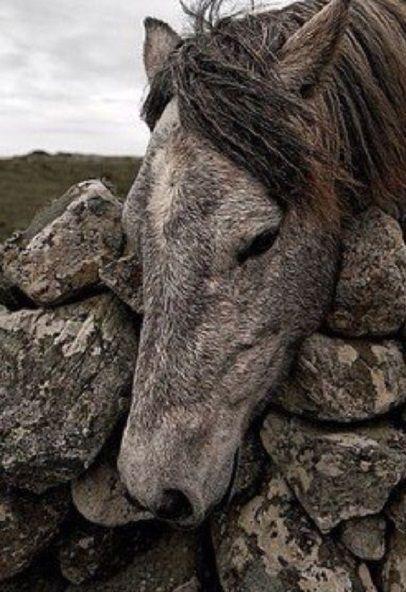 Camouflage horse, hest, animal, beauty, beautiful, gordeous