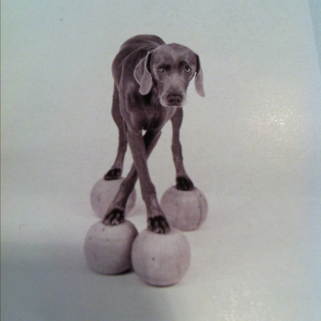 William Wegman-Cross Training