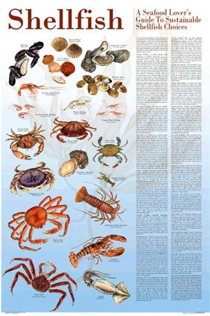 Seafood Lover's Guide To Sustainable Shellfish 24x36. Via Charting Nature. http://www.chartingnature.com/poster.cfm/sustainable-shellfish-poster/116