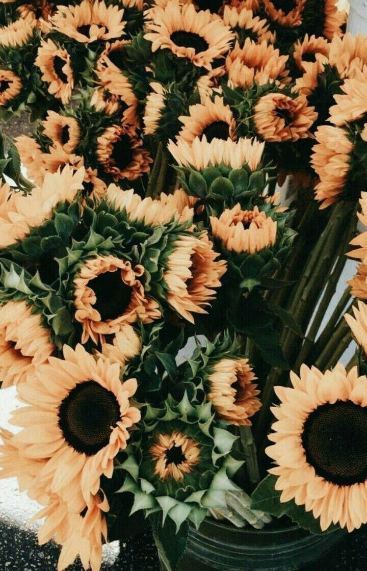 Pinterest Eydeirrac Sunflower Wallpaper Flower Aesthetic