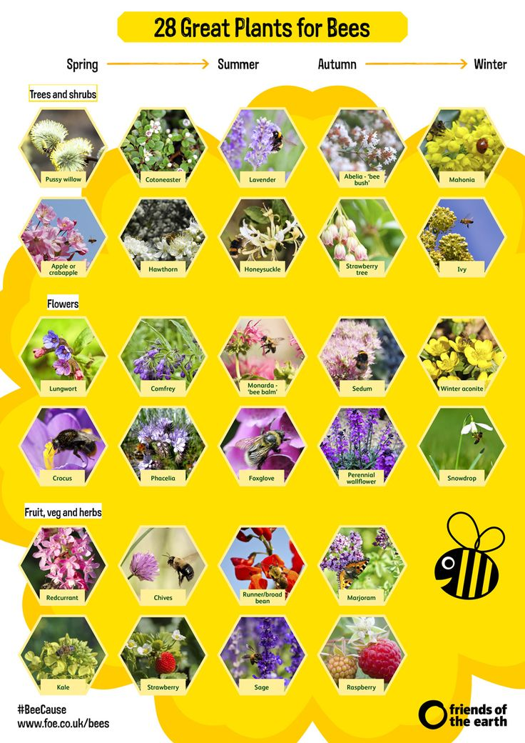 Seasonal guide to bee-friendly plants.   Help your local bees and join Friends of the Earth's Great British Bee Count (19 May - 30 June 2016).  #greatbritishbeecount