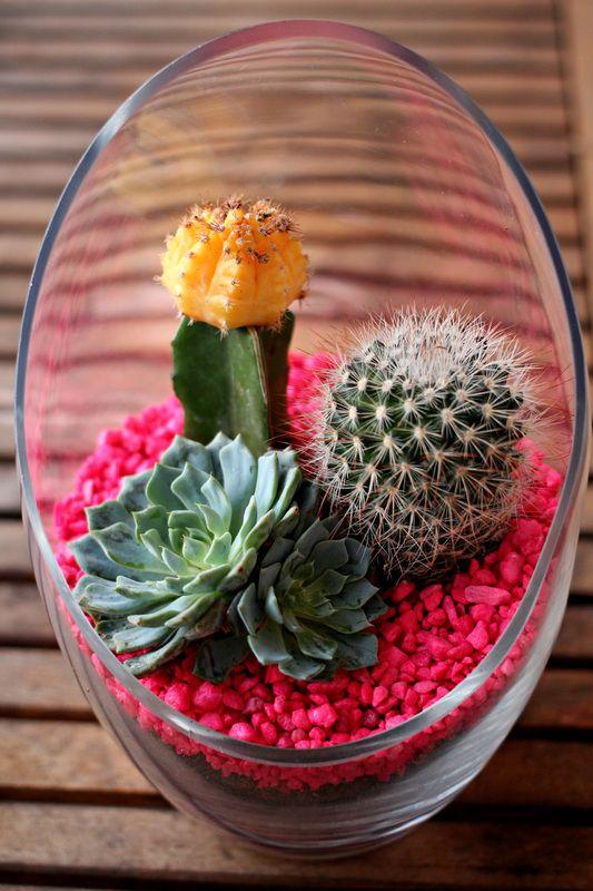 Bonito terrario de suculentas con piedra en rosa...