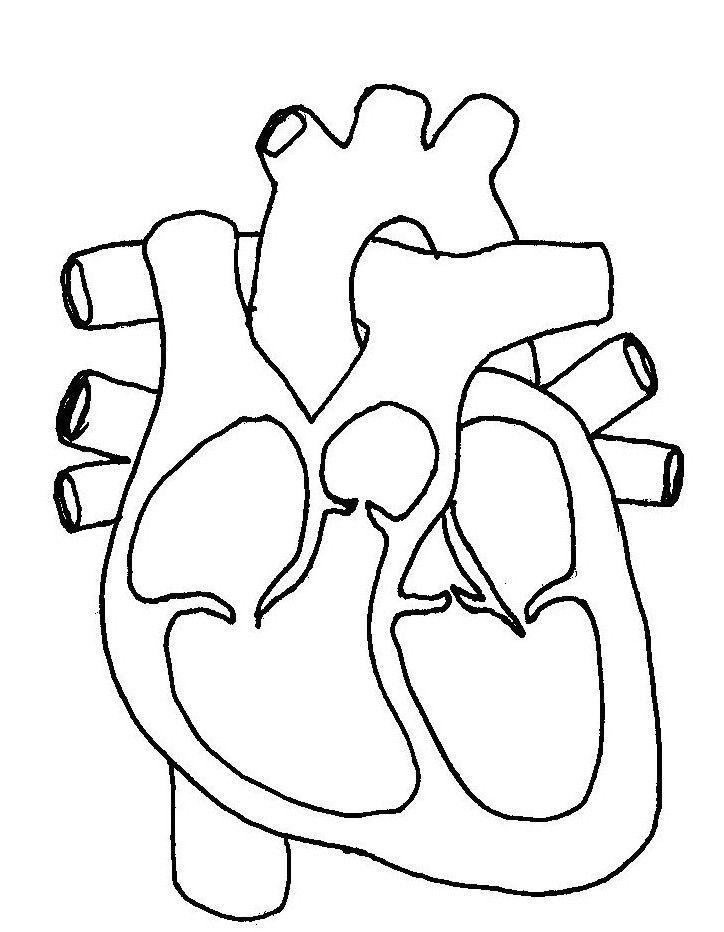 Okul öncesi Iç Organlar Boyamaiç Organlar Sanat Etkinliğibeyin