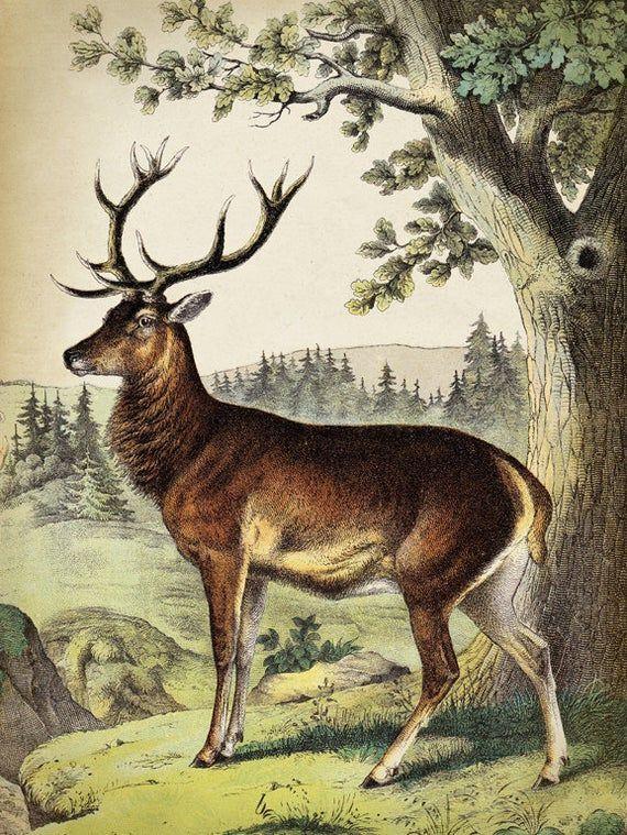 Deer Print Deer Poster Animal Poster Deer Painting Vintage Etsy Deer Illustration Deer Poster Deer Painting