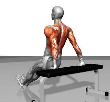 tricep dips muscles worked