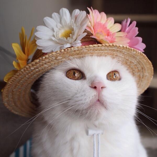 Ma new hat.