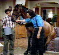 "The stunt horse ""Kit Kat"" won a PATSY for appearing on TV shows like Perfect Strangers, The Fall Guy and Taxi."