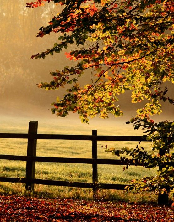 : Fence, Nature, Autumn, Beautiful, Fall, Place, Morning, Country