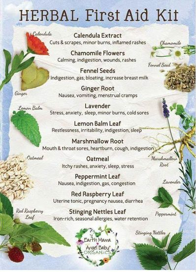 Useful chart on helpful #herbs for health problems https://plus.google.com/+TamaraLaschinsky/posts/NjSv9pLGiBv #Wellness #Health #Natural #Herbal #Holistic #EssentialOils - Pinned by The Mystic's Emporium on Etsy