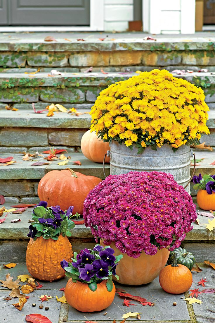 6 Things You Didn't Know About Mums | Southern Living