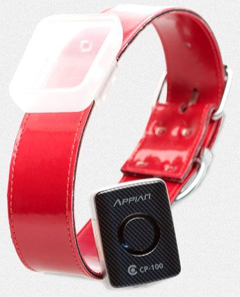 Wearables For Pets likewise Babbs347umrace also Dogs Collar Stock Images Image 26285564 additionally Lps Short Hair Cats moreover Page2. on gps cat tracker