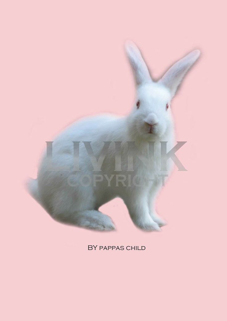 50 x 70 White bunny by Pappas child via LIVINK. Click on the image to see more!