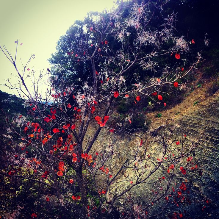 Winter Christmas colours !!