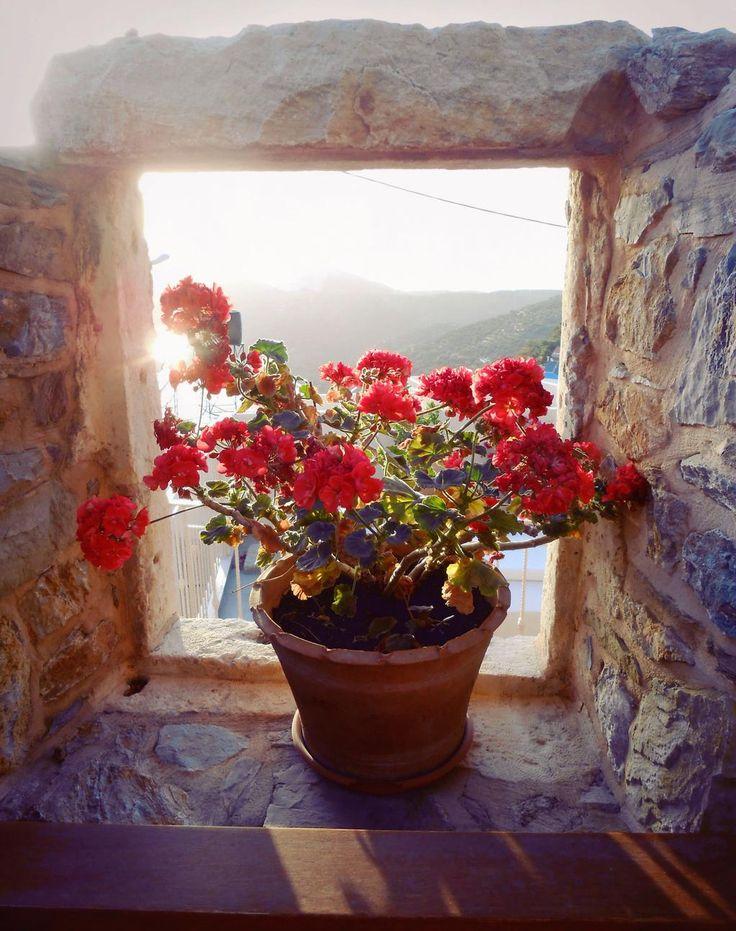 Sun is shining at Cressa Ghitonia Village! Join us: http://www.cressa.gr     Ο ήλιος λάμπει στο χωριό μας! #sun #Crete #village #september #Greece