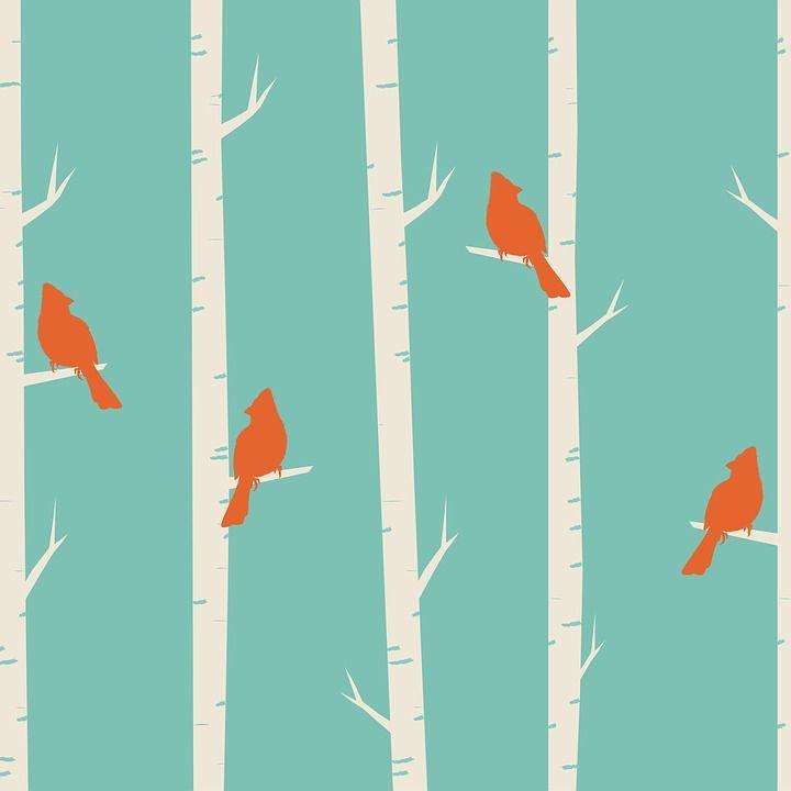 Pássaros, Árvore, Bétula, Bétulas, Cardeal