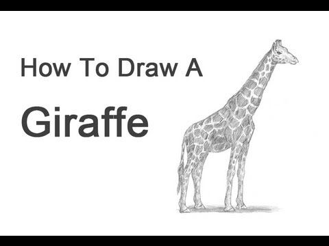 The giraffe that walked to Paris--How to Draw a Giraffe - YouTube