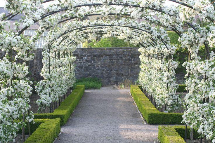 Aberglasney Gardens, Llangathen,Carmarthenshire