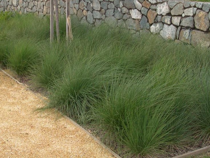 Mass planted Poa - Native Tussock Grass | http://www.bluedale.com.au/system/files/imagecache/gallery_images/product_images/Eskdale-Poa.jpg