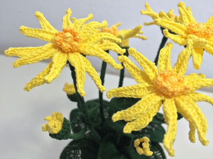 L'arnica montana con il suo giallo solare  colora e ravviva tutti i prati di montagna . Una pianta che gli animali al pascolo evitano per...