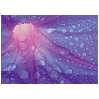 Purple Flower #postcards