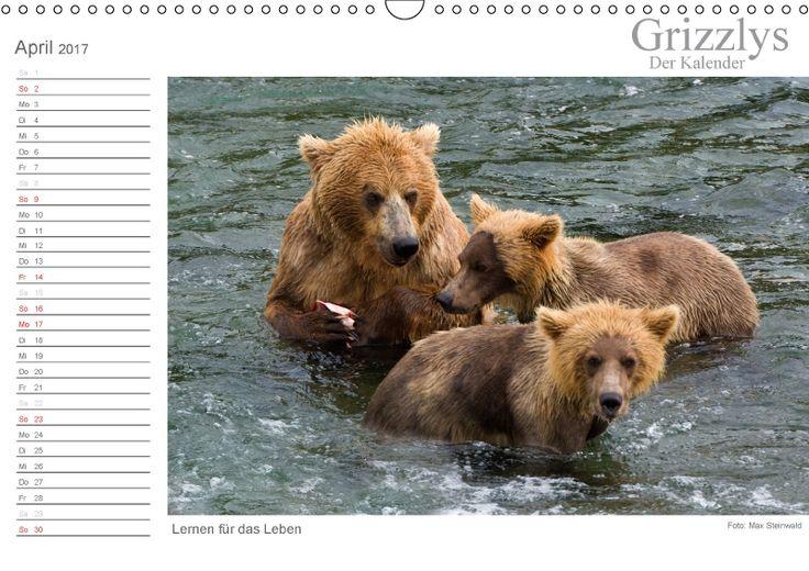 Grizzlys - Der Kalender CH-Version Grizzlybären - ein Fotoshooting in der Wildnis Alaskas. Grizzlybären in ihrer natürlichen Umgebung. Beeindruckende Fotos dieser Spezie aufgenommen in der Wildnis Alaskas.