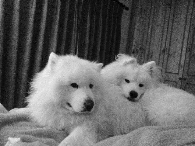 Best pals.