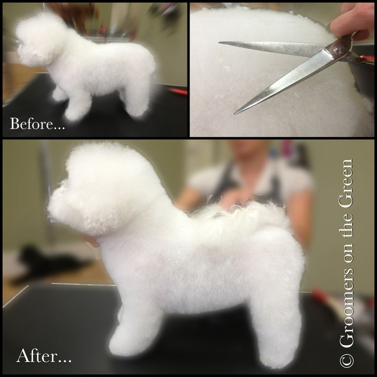 how to use clippers to clip a maltese dog head