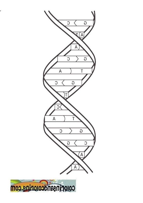 genetics coloring pages - photo#12