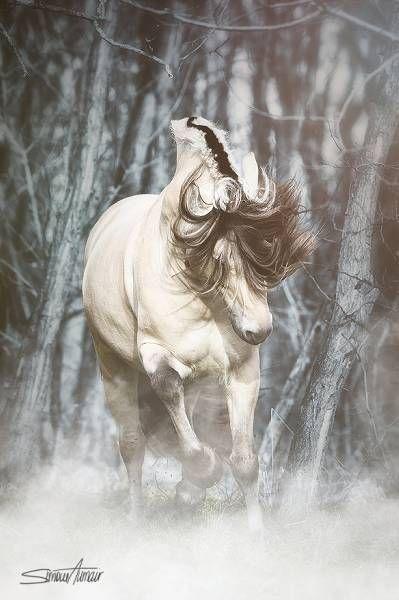 Fjord horse.