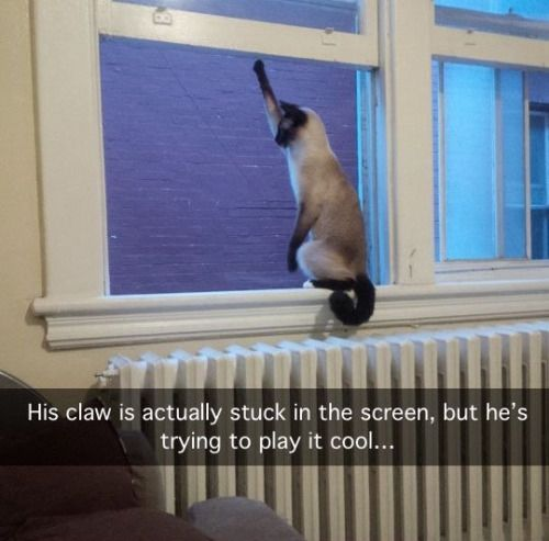 Humor Train - Funny Pictures - Tap the link now to see all of our cool cat collections!