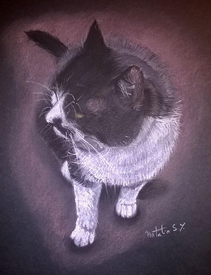 La muely #cat #catdrawing #pastels #sketch #pasteldrawing