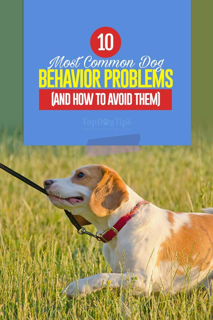How To Fix 10 Most Common Dog Behavior Problems Dog Behavior