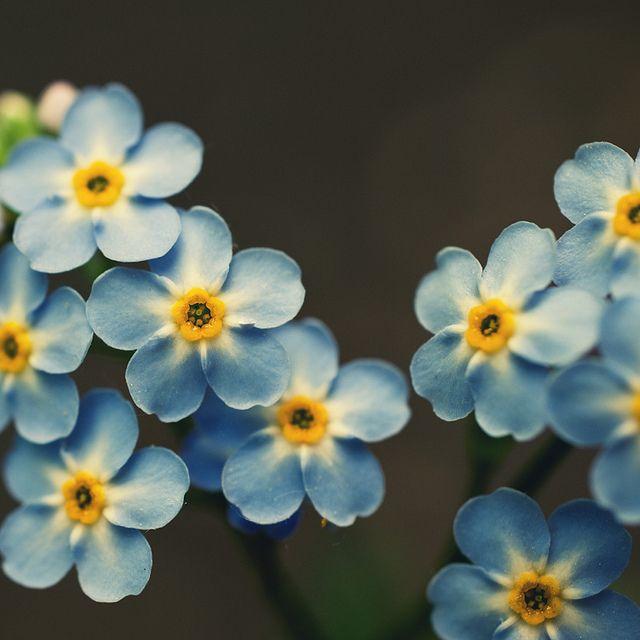 azuis.