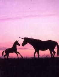 Unicorns are lame, said nobody ever!