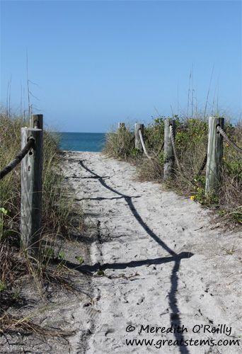 Turtle Beach Florida Photo Meredith O Reilly Www Greatstems