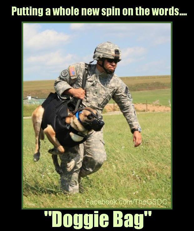 how to train a working dog