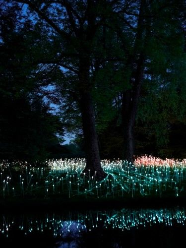 Beautiful Bruce Munro installation at Longwood Gardens