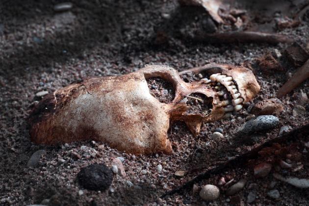 Arkeologene har funnet skjelettene av i alt 41 krigere gravlagt i de to vikingskipene.