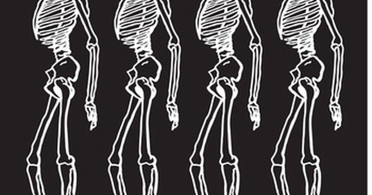 ¿Cuáles son las funciones del esqueleto apendicular?. El esqueleto apendicular humano tiene 126 huesos. Esta parte del esqueleto comprende los brazos y las piernas, o apéndices, además de los huesos de las caderas y hombros. Cada brazo contiene 30 huesos, al igual que las piernas. Los cuatro huesos del hombro se llaman cintura pectoral y la cintura pélvica contiene los dos huesos de la cadera.