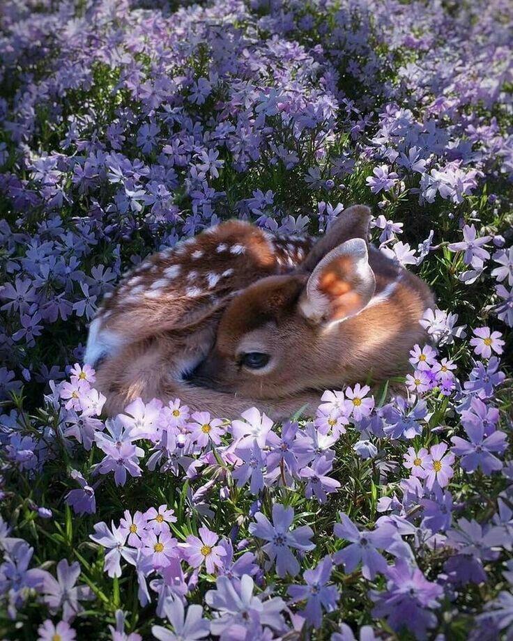 Beautiful, this looks like Bambi ❤