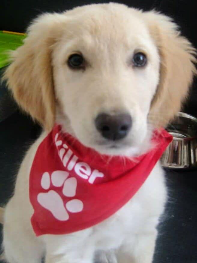 Hunde Foto: Renate und Sammy - Sammy der Killer 😂 Hier Dein Bild hochladen: http://ichliebehunde.com/hund-des-tages  #hund #hunde #hundebild #hundebilder #dog #dogs #dogfun  #dogpic #dogpictures