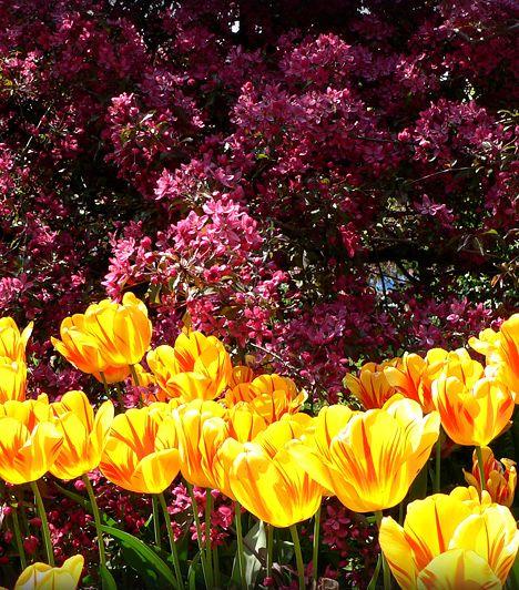 Budai Arborétum. A Gellért-hegy déli lábánál elterülő hat hektáros arborétumot 1975-ben nyilvánították természetvédelmi területté. A mediterrán és szubtrópusi növénykülönlegességekben is gazdag kertészetben több mint 1400 növényfaj, több száz hagymás virágféle és 250-fajta dísznövény magával ragadó környezetében lehet megfeledkezni a főváros zajáról.