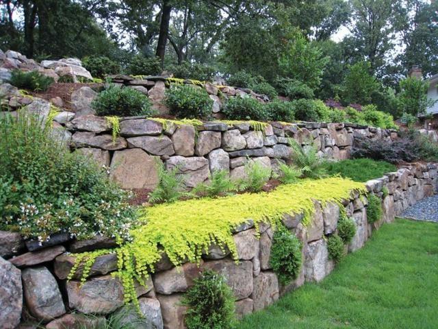 Une vue d'arbustes dans un jardin et un mur en pierres