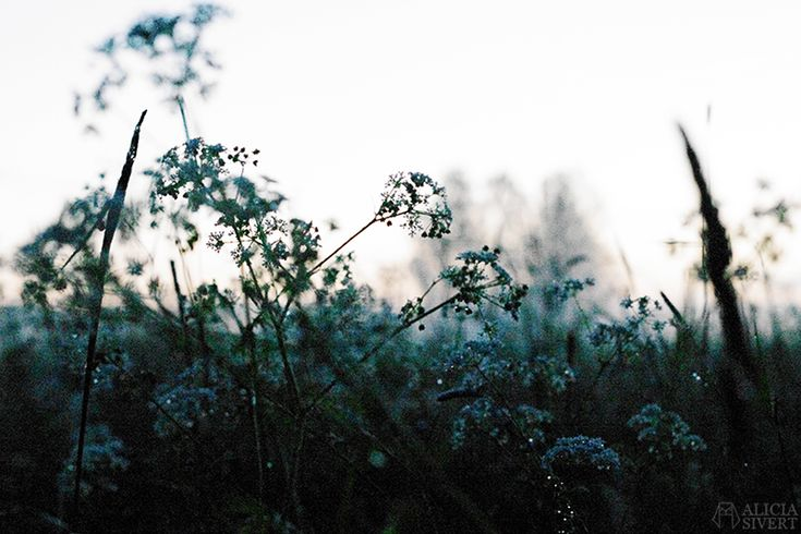 Photo by Alicia Sivertsson.