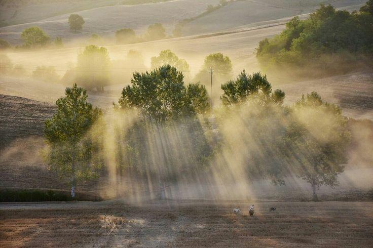 Shepherd in the sunrise near Lornano, Chianti. The beauty of Tuscany. Photo Luca Di Monte