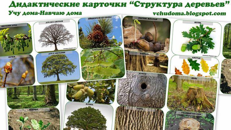 """Учу дома: Дидактические карточки """"Структура деревьев"""""""