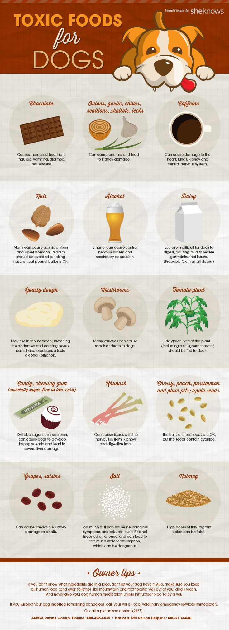 List Of Foods That Harm Dogs