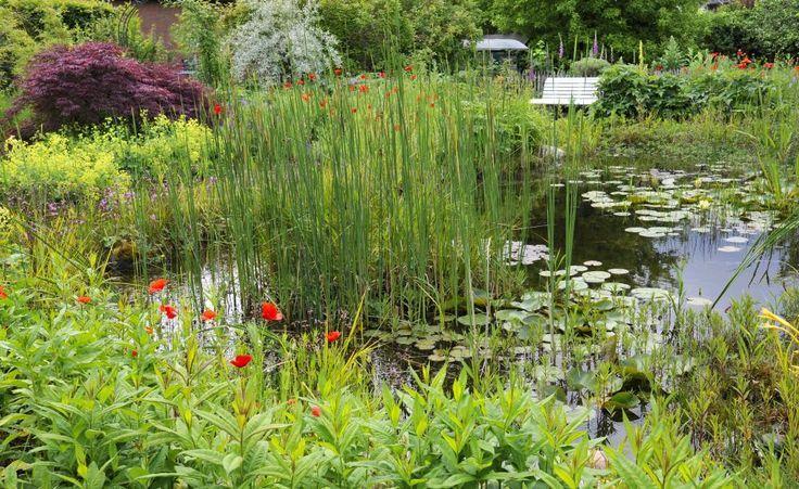 Uferbepflanzung Teich Water Features In The Garden Indoor Gardening Kit Organic Gardening