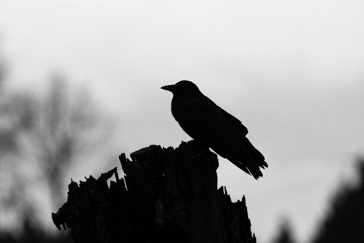 Zen-like silhouette of a crow on a piling. Click image to enlarge.