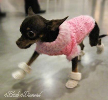 Интернет магазин ботинки для собак по украине